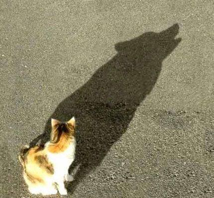 Cat with wolf shadow